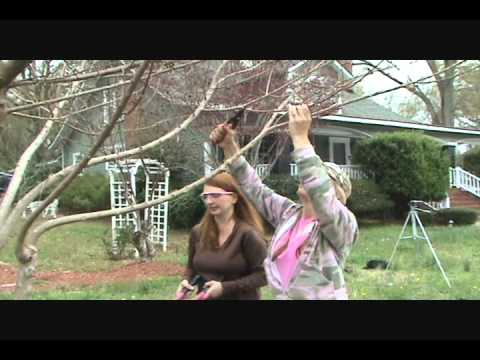 How to Prune Crape Myrtles correctly