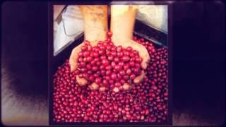 поставщик кофе в зёрнах из ОАЭ(Предлагаем поставки жаренного и зеленого кофе в зёрнах из Эмиратов. Надёжность поставок гарантируем. Дире..., 2013-08-15T15:53:22.000Z)