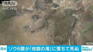 子どもを助けようと・・・野生のゾウ6頭が滝に落ち死ぬ(19/10/06)