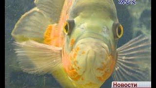 В Искитиме прошел мастер – класс по аквариумистике.