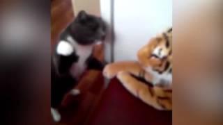 Кошка ненавидит плюшевого тигра