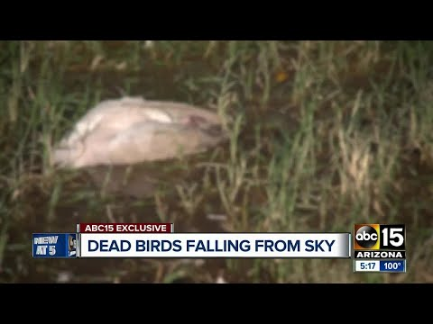 Dead birds falling from the sky in Buckeye