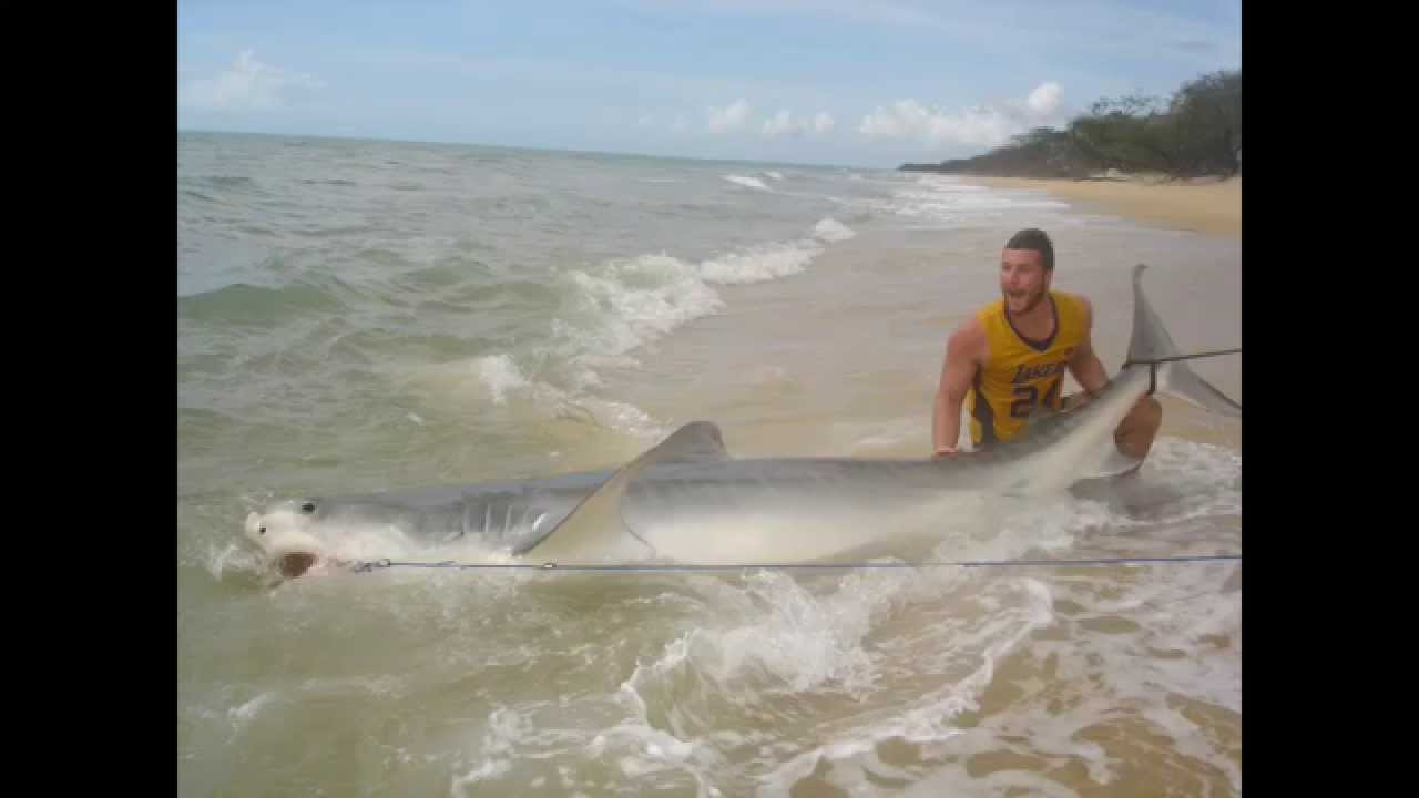 how to catch a tiger shark