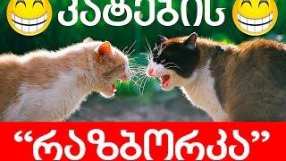 კატების რაზბორკა :) cat fighting