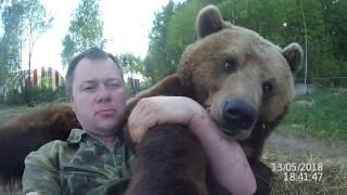 Когда живой медведь используется как подушка ;-)