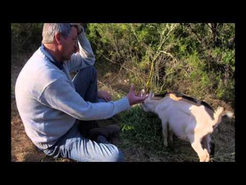 Les Vins Bios du Nouveau Monde - Film Documentaire - Agriculture Biologique