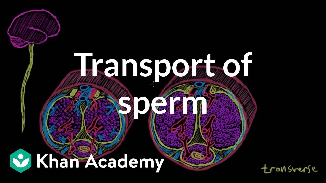 Sperm and ejac video