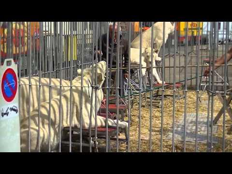 Zoo Du Cirque Pinder Mardi 25 Juin 2013 à Epinal.