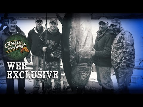 850 Pound Tuna!!! | Web Exclusive (HUGE FISH In PEI)