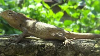 Непал 2014. Живая природа. Видео 720p.