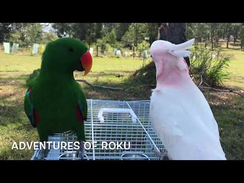 Happy Pet Parrots Playing Outside