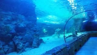 видео Отзыв об Океанариуме и экзотариуме в ТРЦ РИО