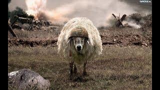 Top 5 zwierząt które wykorzystywało wojsko #14