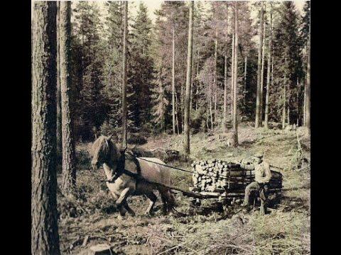 Stopp for rojning i stormfalld skog