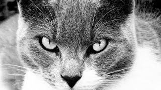 Смешной случай с котом и кошкой / Funny incident with cats