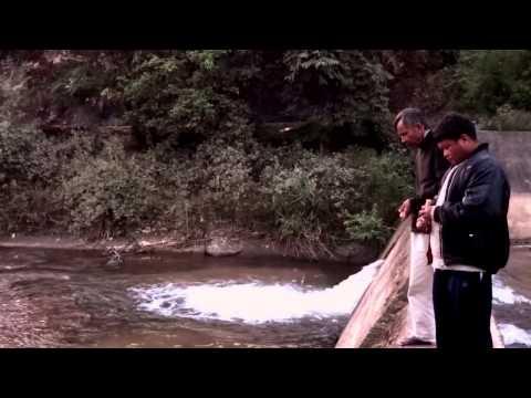 fish english speaker