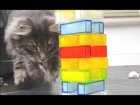 'Cats Playing Jenga Compilation' || CFS