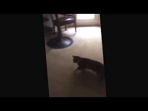 Little cat and dog fight like cartoon characters and kiss at the end.