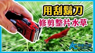 刮鬍刀修剪魚缸的草皮!!水草缸前景草整理技巧。|AC草影水族