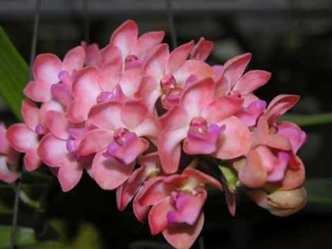 ยิ่งยงคนบุรีรัมย์ดอกไม้ไทย1