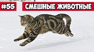 Смешные животные - бегущий кот | Bazuzu Video ТОП подборка октябрь 2017