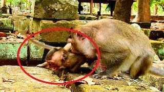 Terrify! Mum fight adult baby seriously why?Adult monkey so hungry mum not give sad baby