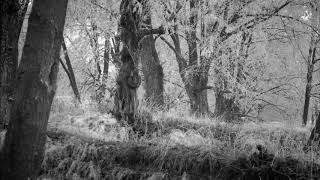 Dead Can Dance - Act II – The Forest
