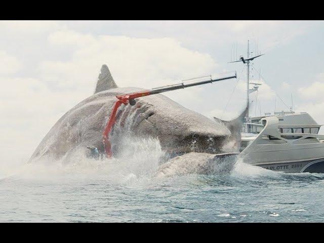 【牛叔】这部让杰森斯坦森下海的电影,中美票房双爆炸,能鲨背后有鲨弄