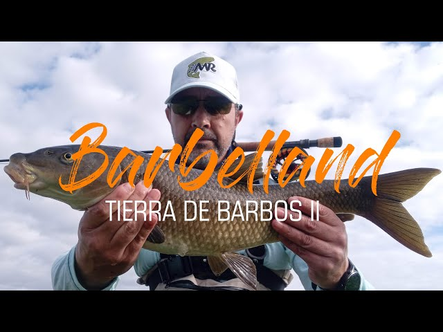Barbelland, tierra de barbos II