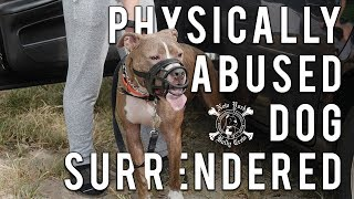 Pitbull Surrendered From Abusive Situation | New York Bully Crew