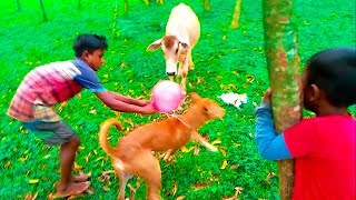 Funny Dogs and Babies Playing Together - dog & baby compilation | Dog Playing With Balloon | lc54