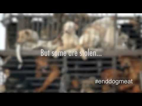 Tweetstorm #EndDogMeat to stop the Yulin dog meat festival!