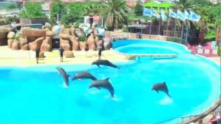 Delfin Show Barcelona Marineland