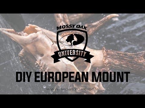 DIY European Mount - How To Skull Mount A Deer