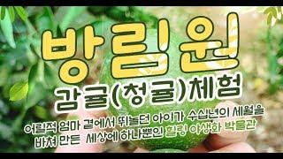 제주 방림원 청귤 감귤 체험 최저가 입장료 할인권