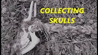 Collecting Deer Skulls and MOAR!
