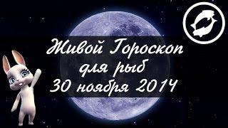 Зайка Zoobe - гороскоп для РЫБ ♓ на 30 ноября