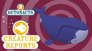 Octonauts: Creature Report - Bowhead Whale