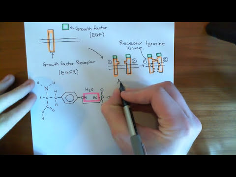 Activatory Mutations in the KRAS G Protein Part 1