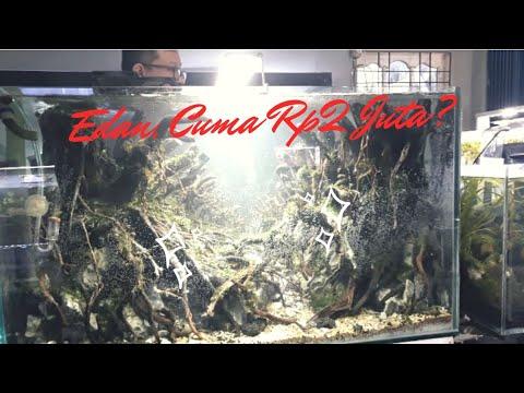 review-aqua-gallery-pekanbaru,-keren-aquascape-air-terjun-pasir-dan-iwagumi-tanpa-injeksi-co2