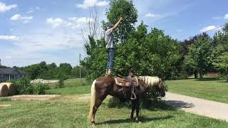 SOLD Marsha, gorgeous chocolate Palomino gaited rocky mtn trail mare for sale! Gaited