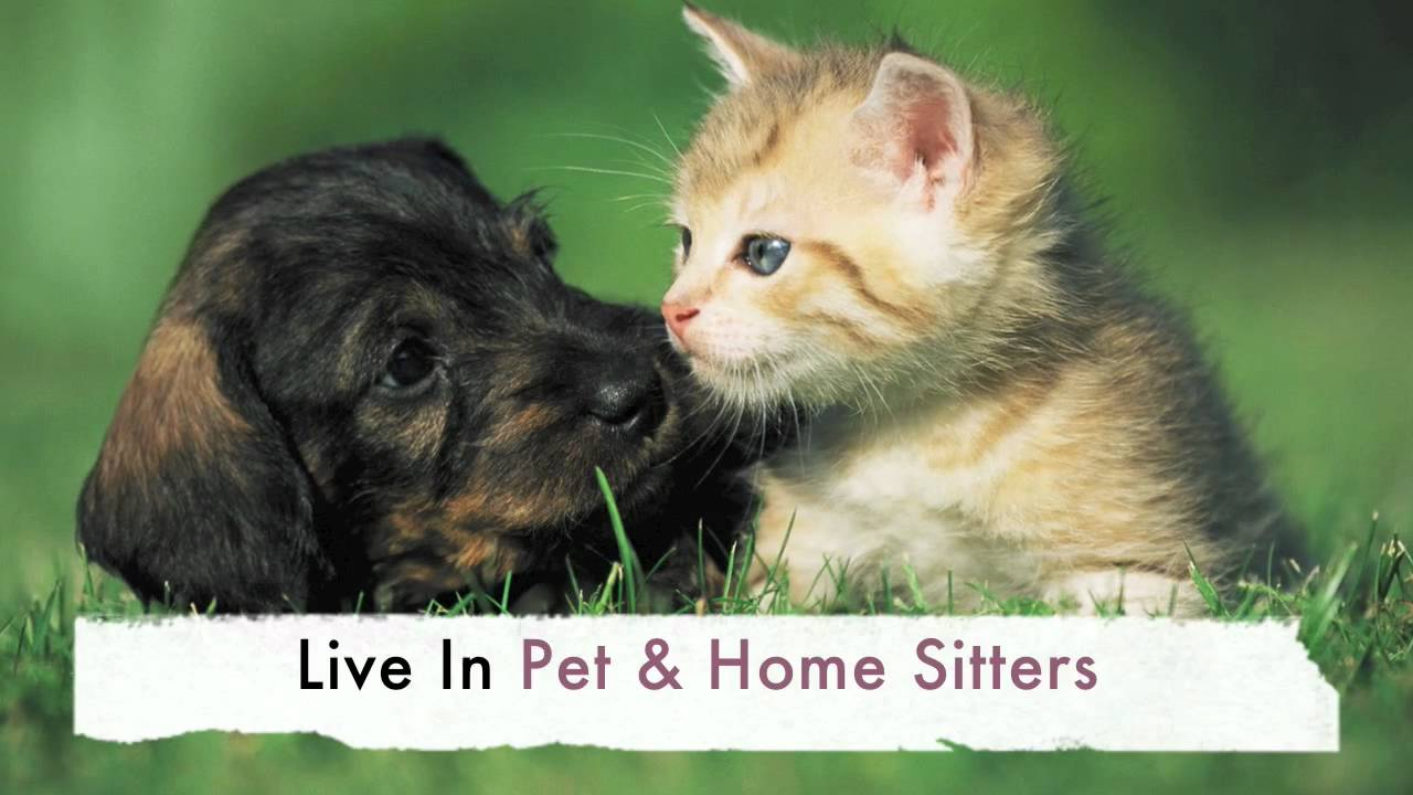 Live in Pet Sitting Services
