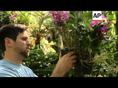 Preview for The New York Botanical Garden's exhibition 'The Orchid Show.'