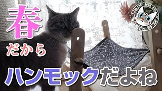 【Jean 546】ジャンくんの猫用ハンモックを出したらすぐ乗った 元野良猫の保護里親記録  Jean, a former stray cat.