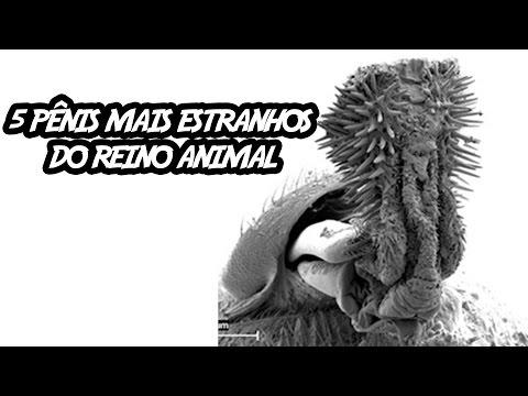 5 Pênis Mais Estranhos do Reino Animal