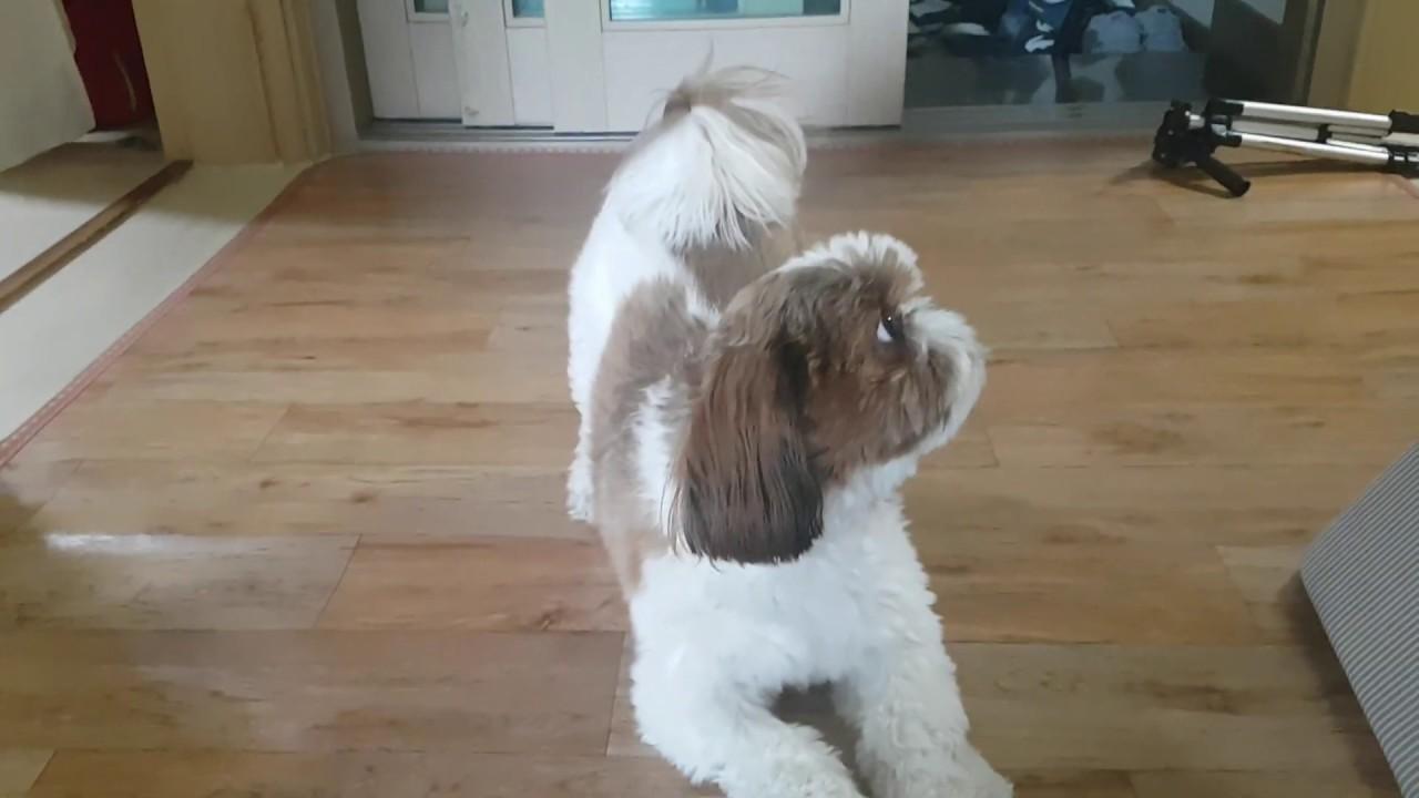 산책 갈까??