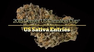 2015 Denver Cannabis Cup: US Sativa Entries