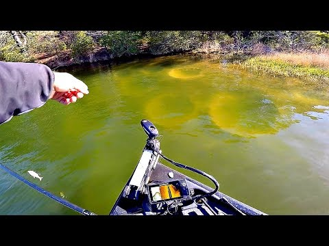 These Fish Are HUGE!! --Bass Fishing A Power Plant Lake