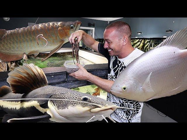 MONSTER aquarium fish VS live WORMS!!