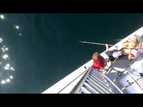 Massachusetts fishermen reel in 920-pound tuna off Cape Cod (VIDEO)
